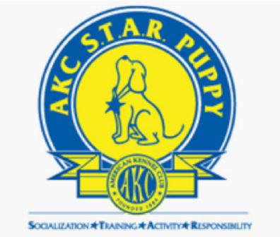 AKC S.T.A.R. (Socialization, Training, Activity, & Responsibility) Puppy Course in Hilo, Hawaii (1)